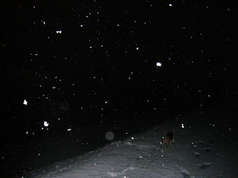 0202雪5.jpg