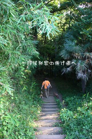0718ハルと散歩2.jpg