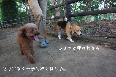 0718ハルと散歩4.jpg