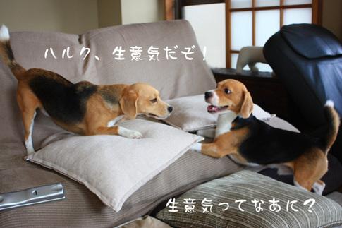 0820夢の多頭飼い9.jpg