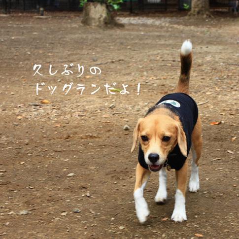 1003代々木公園1.jpg