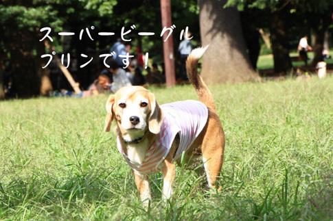 1003代々木公園23.jpg