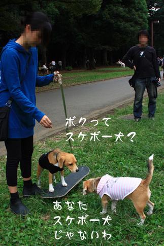 1003代々木公園34.jpg