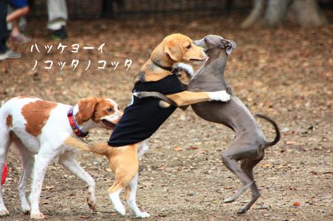 1003代々木公園9.jpg