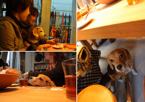 20110109月ちゃん23.jpg