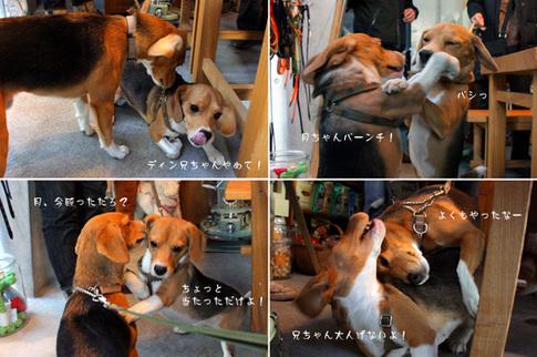 20110109月ちゃん5.jpg