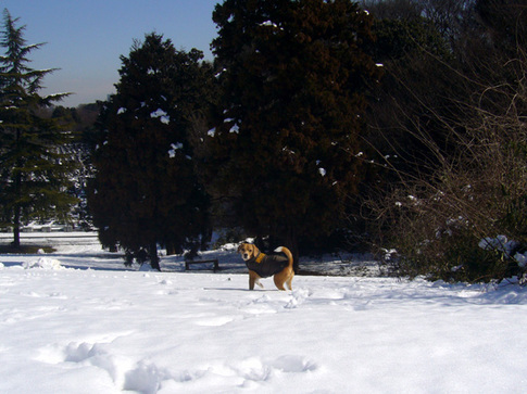 20110215雪2.jpg