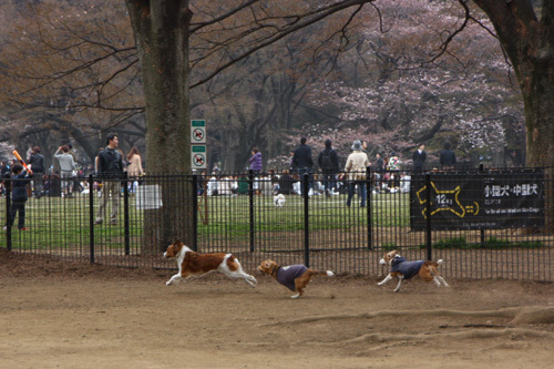 20110402代々木公園6.jpg
