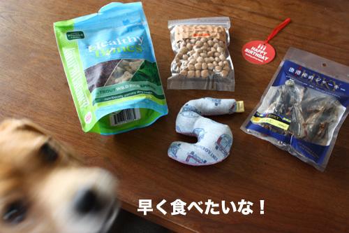 20110607くらちゃん3.jpg