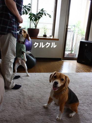 20110607くらちゃん5.jpg