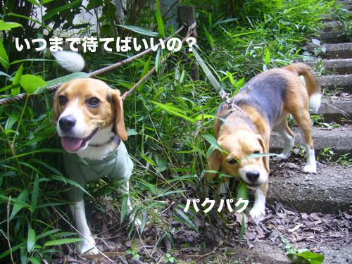 20110607くらちゃん9.jpg