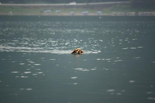 20110812お盆西湖キャンプ58.jpg