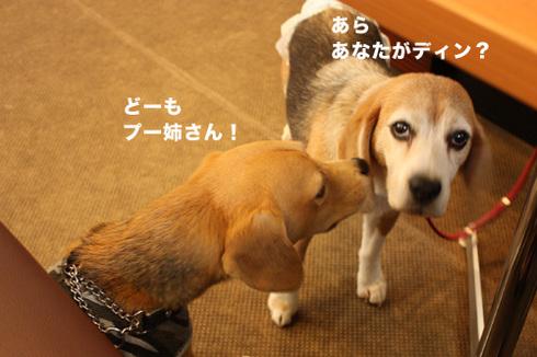 20110912プーちゃん1.jpg