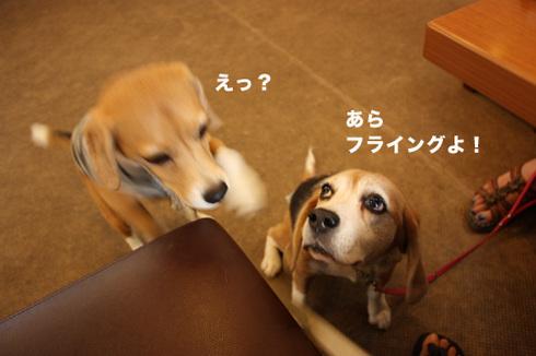 20110912プーちゃん5.jpg