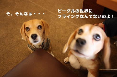 20110912プーちゃん6.jpg