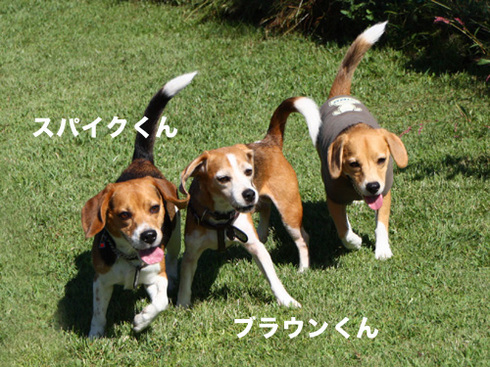 20110918朝霧オフ会19.jpg
