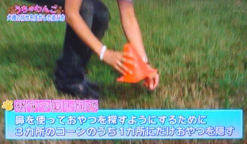 20111001うちのわんこ14.jpg