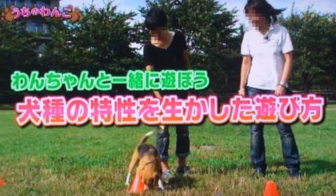 20111001うちのわんこ3.jpg