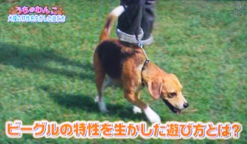 20111001うちのわんこ7.jpg