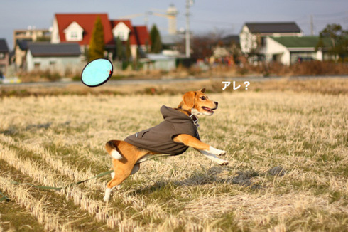 20120102パパ実家9.jpg
