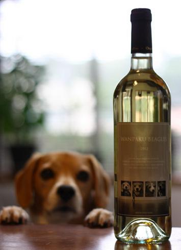 20120422わんぱくワイン1.jpg