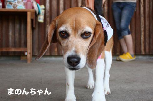 20120610ディニーズ9.jpg