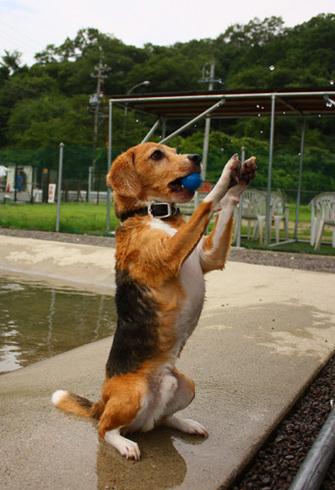 20120714犬山ラン14.jpg
